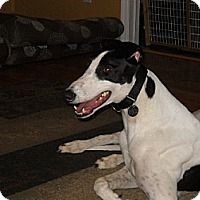 Adopt A Pet :: Gez Need N Speed - Knoxville, TN