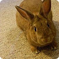 Adopt A Pet :: Bopp - Portland, ME