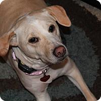 Adopt A Pet :: Marley - Nashville, TN