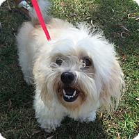 Adopt A Pet :: FOSTER - West LA, CA