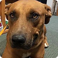 Adopt A Pet :: Luke - North Bend, WA
