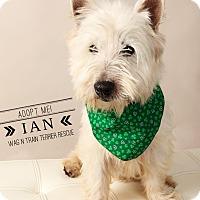 Adopt A Pet :: Ian-Pending Adoption - Omaha, NE