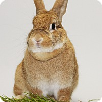 Adopt A Pet :: Cinnamon - Williston, FL