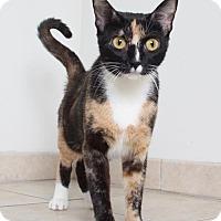 Adopt A Pet :: Clara C160367: PENDING ADOPTION - Edina, MN