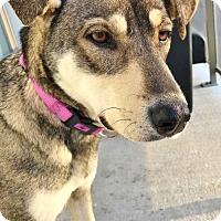 Adopt A Pet :: Layla - London, ON