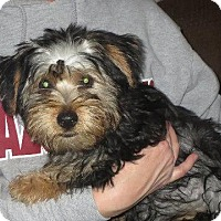 Adopt A Pet :: Chunky Monkey - Salem, NH