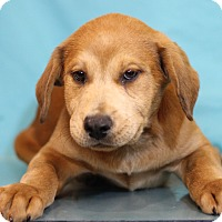 Adopt A Pet :: Andrew - Waldorf, MD