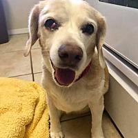 Adopt A Pet :: Daisy May - Jacksonville, FL