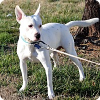 Adopt A Pet :: Stoney - Albemarle, NC