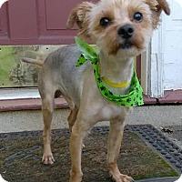 Adopt A Pet :: Quincy - Lawrenceville, GA