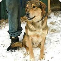 Adopt A Pet :: King - Toronto/Etobicoke/GTA, ON