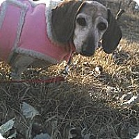 Adopt A Pet :: Molly - Geneseo, IL