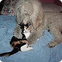 Adopt A Pet :: Careen - Santa Rosa, CA