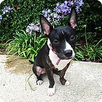 Adopt A Pet :: Rosy - La Habra, CA