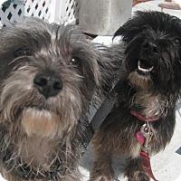 Adopt A Pet :: Abby & JoJo - Jacksonville, FL