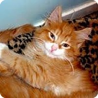 Adopt A Pet :: Lexie - Arlington, VA