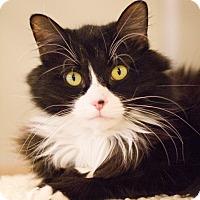 Adopt A Pet :: Ziggy - Grayslake, IL