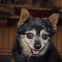 Adopt A Pet :: Rex - Rosamond, CA