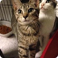 Adopt A Pet :: Bianca - East Brunswick, NJ
