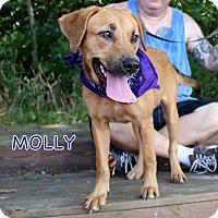 Adopt A Pet :: Molly - Groton, MA