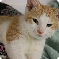 Adopt A Pet :: Chuck - Medina, OH
