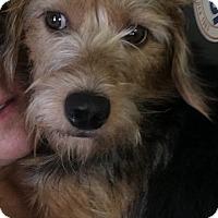 Adopt A Pet :: Watson - Henderson, KY