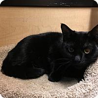 Adopt A Pet :: Tori - Riverside, CA