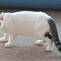 Adopt A Pet :: Lux - Americus, GA