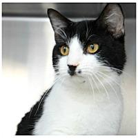 Adopt A Pet :: Chaplin - Forked River, NJ