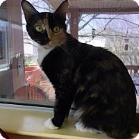 Adopt A Pet :: Mayva NK - Schertz, TX