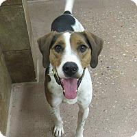 Adopt A Pet :: Dusty *Petsmart GB* - Appleton, WI