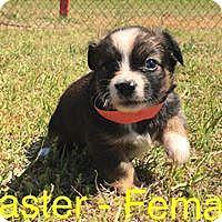Adopt A Pet :: Easter - Waycross, GA