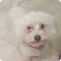 Adopt A Pet :: Robbie - Chandler, AZ