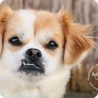Adopt A Pet :: Sadie - Strongsville, OH