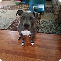 Adopt A Pet :: Luke (COURTESY POST) - Baltimore, MD