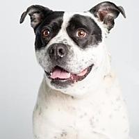 Adopt A Pet :: Tod - Santa Paula, CA