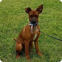 Adopt A Pet :: Molly - Little Rock, AR