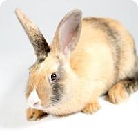 Adopt A Pet :: Hazel - Kingston, ON