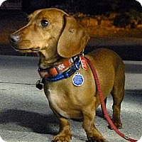 Adopt A Pet :: Tucker - Toronto, ON