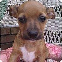 Adopt A Pet :: Meenie - Bloomingdale, GA