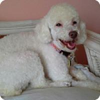 Adopt A Pet :: KRISSIE - Melbourne, FL