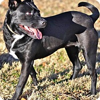 Adopt A Pet :: Gracie - Nolensville, TN