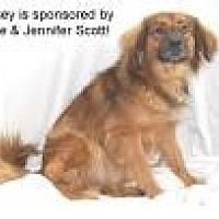 Adopt A Pet :: Lindsey - Jackson, MS