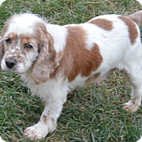 Adopt A Pet :: Wilma - Prole, IA