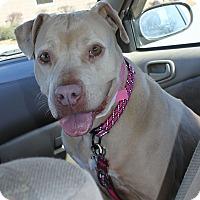 Adopt A Pet :: Chestnut - Snellville, GA