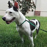 Adopt A Pet :: Sushi - Summerville, SC