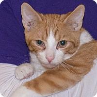 Adopt A Pet :: Christmas - Elmwood Park, NJ