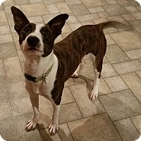Adopt A Pet :: Penny - Richmond, VA