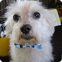 Adopt A Pet :: Sebastian - ADOPTION PENDING - Livonia, MI