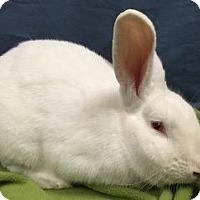 Adopt A Pet :: Micah - Woburn, MA